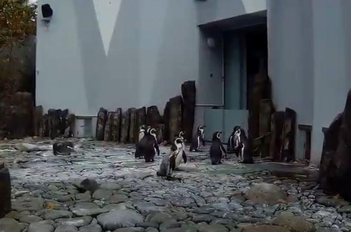 Prague zoo animals