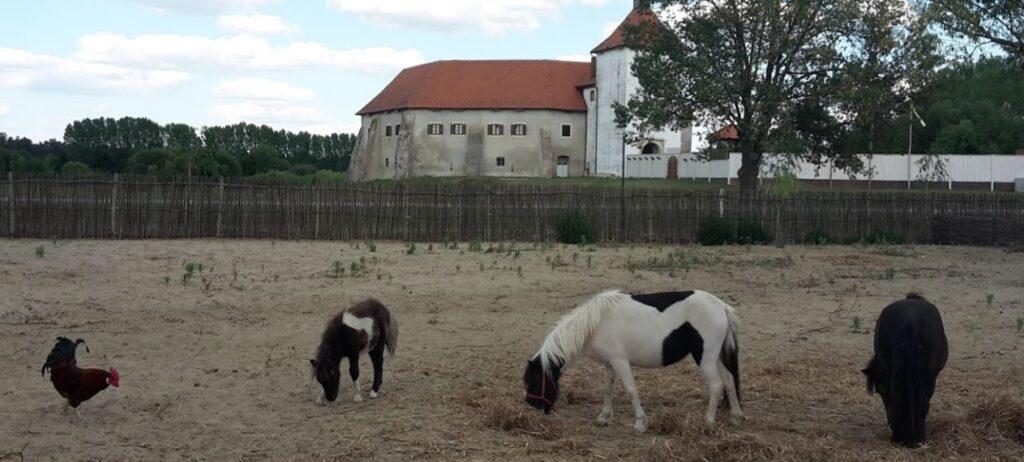donkeys djurdjevac zoo